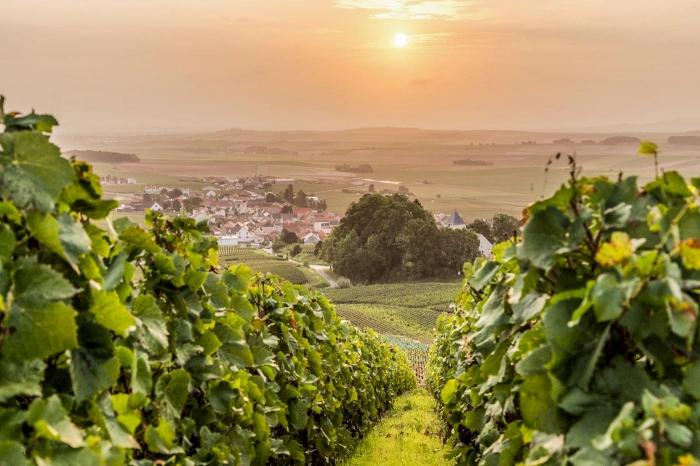 Champagne dei Vigneron